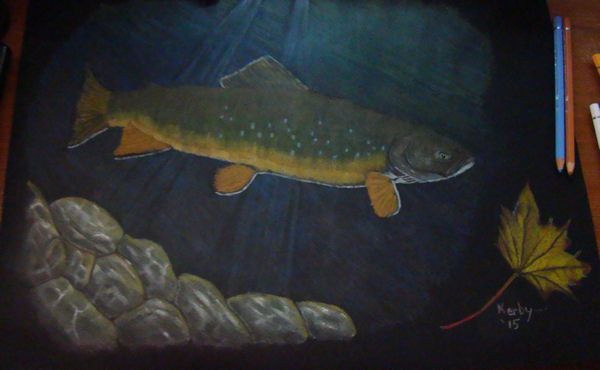 draw-brooktrout