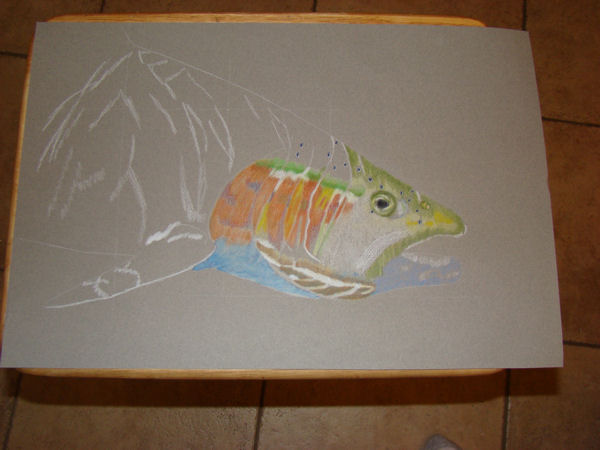 how to draw a rainbow trout fish