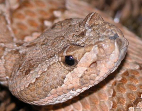 some snakes that look like garter snake  - Page 2