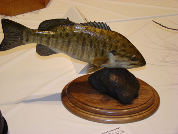 2009 world taxidermy fish pics
